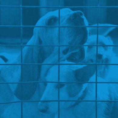 pav-quienes-somos-velado-azul